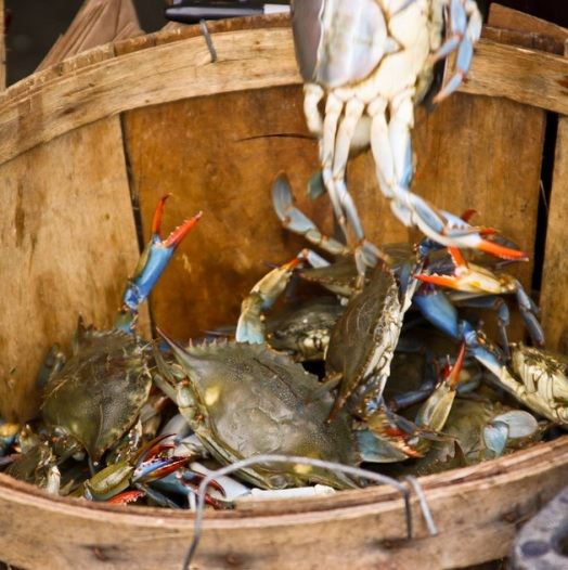 Bucket-of-crabs