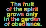 obedience (2)