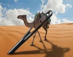 eye camel