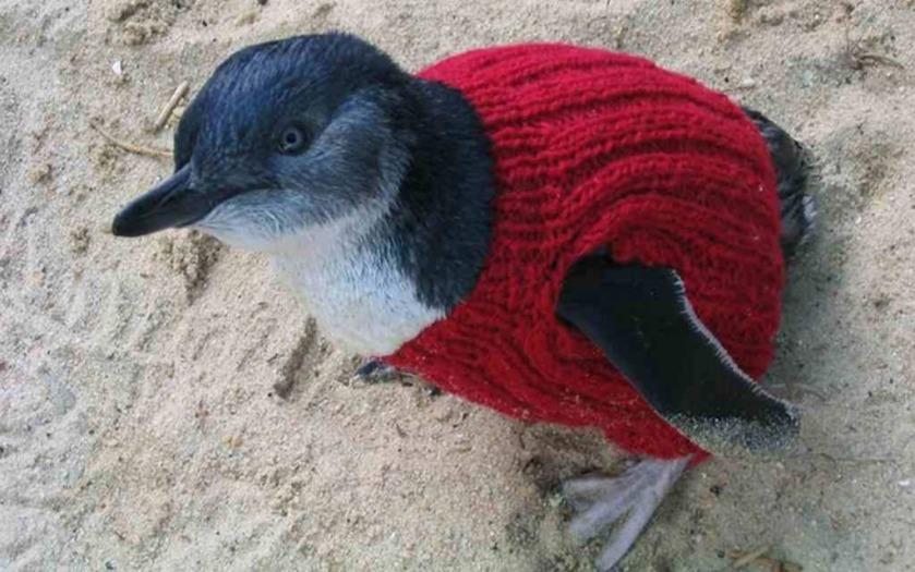 Alfie Date's penguins