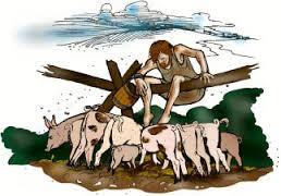 prodigal pigs