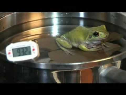 cook a live frog
