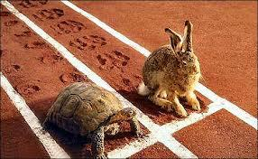 tortois and hare