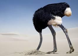 ostrich sand